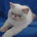 GIC & PR Tri Tri Trionfo di Wonderfulcat