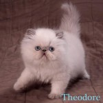 Persnose Theodore