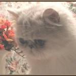Vita Skogens Anastasia
