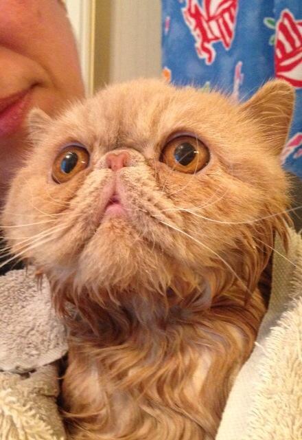 geggiga ögon katt